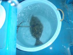 Firstfish01